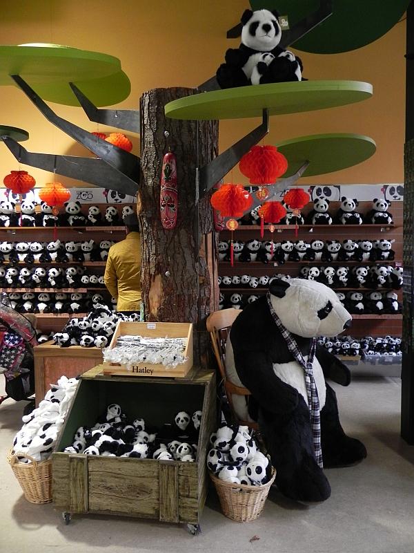 Pandamania in Edinburgh