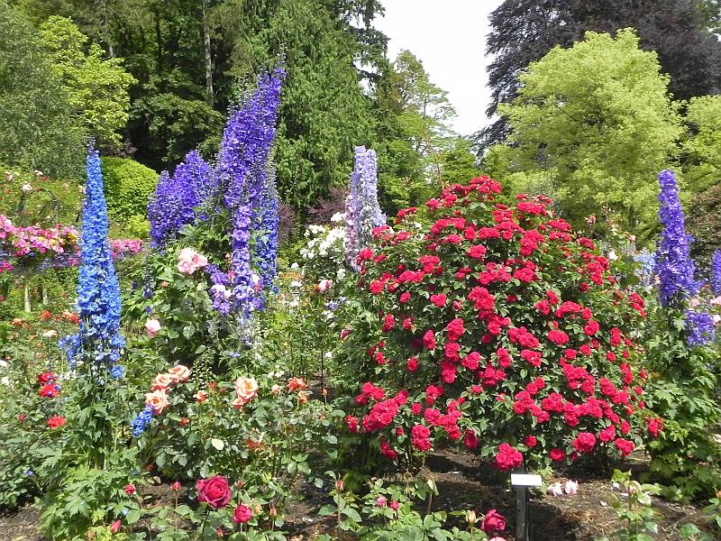 Butchand Gardens