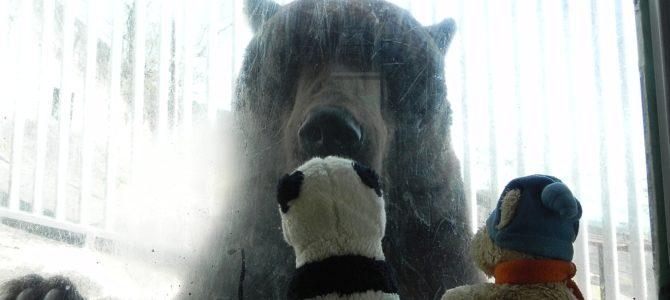 Bären im Überfluss