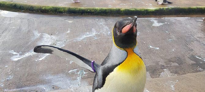 Standardroute im Standard Programmpunkt Zoo