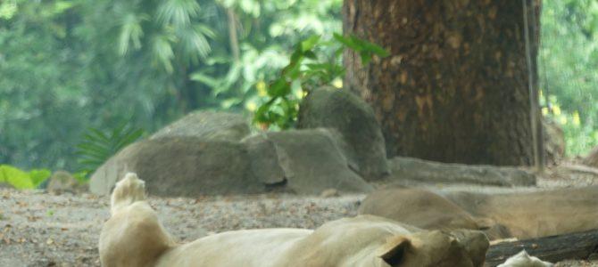 Hitzeschlacht im Zoo
